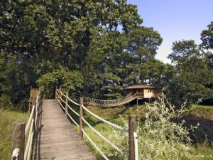 Bensfield Tree House (1)