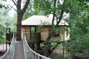 Riverbank Tree House 2