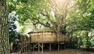 The curved design of the Little Acorn treehouse, built and designed by Blue Forest, echoes the shape of branches.